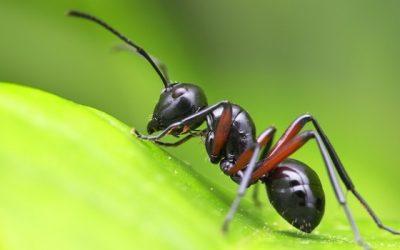 Da bambino mangiavo le formiche