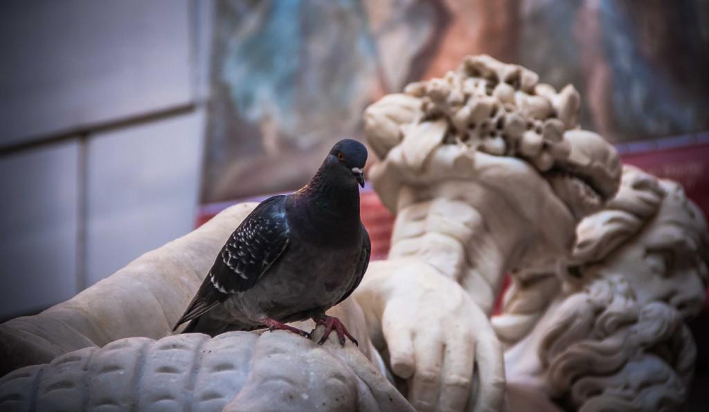 Napoli, colombo nero sulla statua del dio Nilo