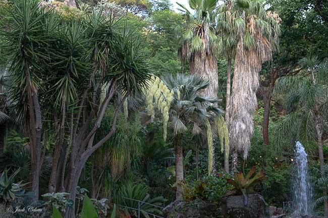 piante tropicali ai giardini La Mortella